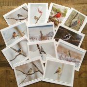 Winter Birds set of 12