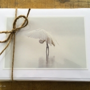 Herons & Egrets Set of 12
