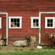 Farm,-Gallatin,-NY-IMG_1272