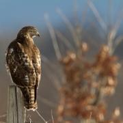 Owls&BOP-32