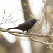 Song Birds & Other Beauties-25