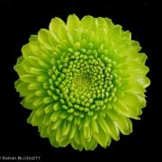 Green Mum 3634_2