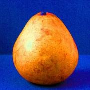 Pear Orange