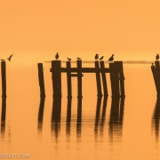 Sunrise & Terns 54A3270