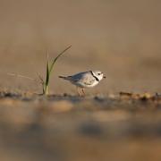 Water & Sea Birds-37