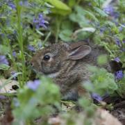 Bunny 0285