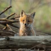 Fox Kit 9413