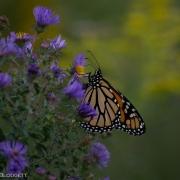 Monarch 9769