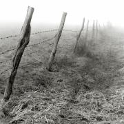 Fence & Fog