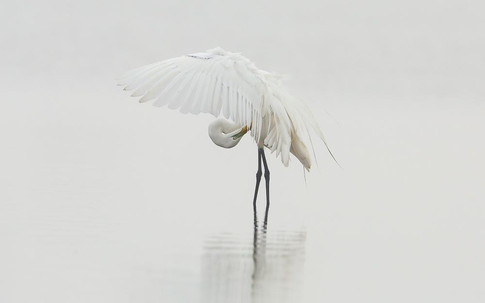 Herons&Egrets-27